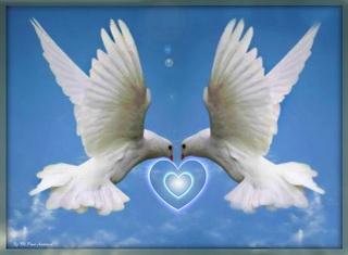 amor paloma